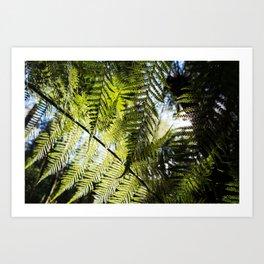 Underneath the Ferns Art Print