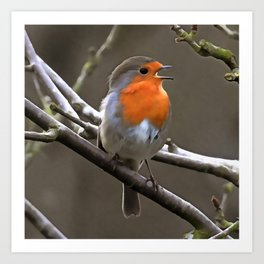 European Robin Red and Grey Painting Art Print