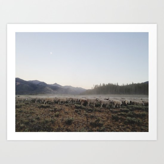Sheep Dust Art Print