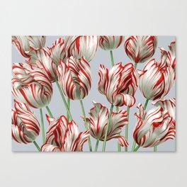 Semper Augustus Tulips Canvas Print