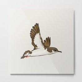 Simple Minimalist Manx Shearwater Flying Metal Print