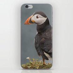 Puffin iPhone Skin