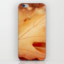 AFE Autumn Leaves, Nature Photography iPhone Skin