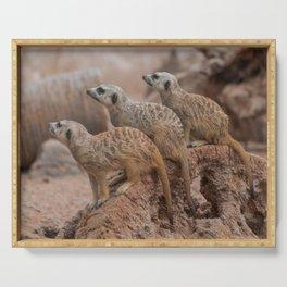 Meerkats Serving Tray