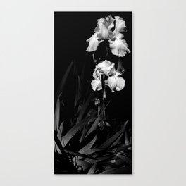 White Iris, Messenger Between Heaven And Earth Canvas Print