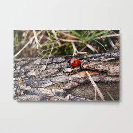 Lady Bug, Kingston, WA Metal Print