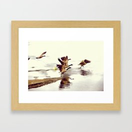 The Take Off - Wild Geese Framed Art Print
