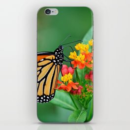 Monarch's Busy Day iPhone Skin