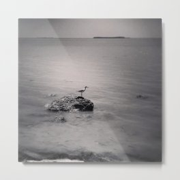 Sandpiper, and the bottom. Metal Print