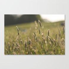 Meadow (Colour) Canvas Print