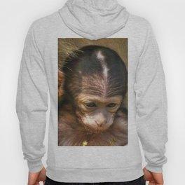 Sweet Baby Monkey Hoody