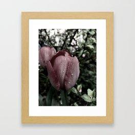 moody tulip Framed Art Print