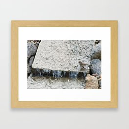 Water (Chipping Sparrow) Framed Art Print