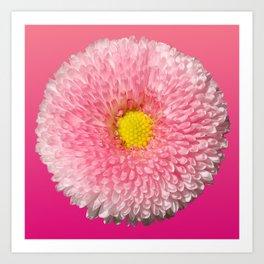 Pink Daisy Art Print