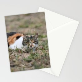 Multicolor cat is playing hide and seek Stationery Cards