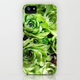 GREEN HENS N' CHICKS SEDUMS-SUCCULENTS iPhone Case