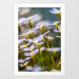 Bluets in the wind Art Print
