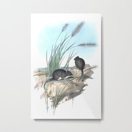 Mice in the reed overviewing the ocean Metal Print