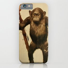 Vintage Print - Birds and Nature (1899) - Chimpanzee iPhone Case