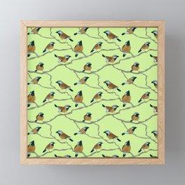 Black-Throated Finches Framed Mini Art Print