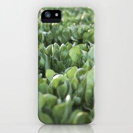 Food photography, macro photo, nature fine art, Italy, Sicily, Apulia, kitchen wall iPhone Case