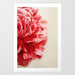 Red Carnation Art Print