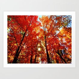Sun in the Trees Art Print