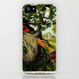 Baltimore Oriole Kingbird Orchard Oriole2 iPhone Case