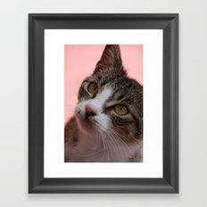 Stray Framed Art Print