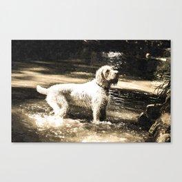 White Italian Spinone Canvas Print