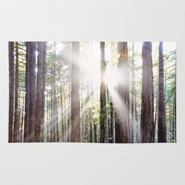 Sunburst Through the Redwoods Rug