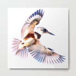 Colorful Kingfisher Metal Print