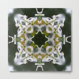 Lacy Serviceberry Mandala - Amelanchier blossoms 0033 k1 Metal Print