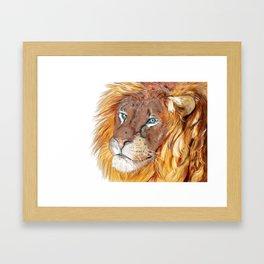 Colourful Lion Framed Art Print