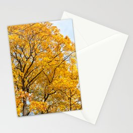 Yellow leaves autumn trees Stationery Cards