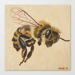 Bee VII (Artemesia) Canvas Print