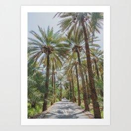 Date Palm Trees in Oman #1 Art Print