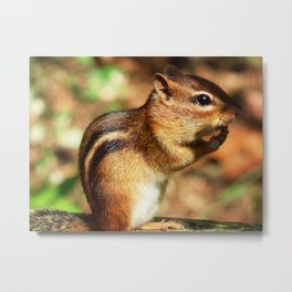 Just chippy! Metal Print