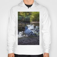 pigeon Hoodies featuring Pigeon by Elliott Kemp Photography