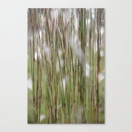 Wispy on green and magenta reeds Canvas Print