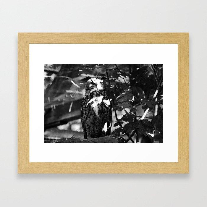 Owl Time Framed Art Print