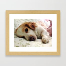 Bashi Framed Art Print