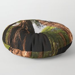 Redwood Tree Tops Floor Pillow