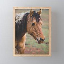 horse by Seth Fink Framed Mini Art Print