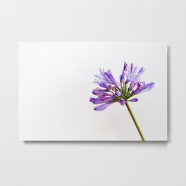 Flowering Wither Metal Print