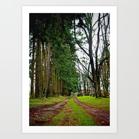 The pathway Art Print