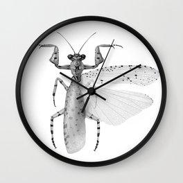 Amorphoscelis tuberulata Wall Clock