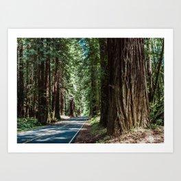Redwood Road Trip - California Art Print