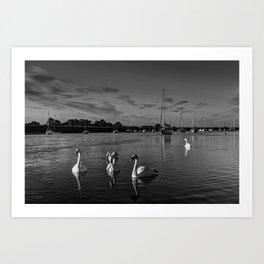 Summer evening swans Art Print