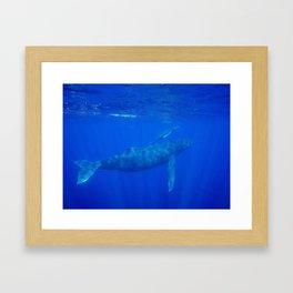 Underwater Humpbacks 8 Framed Art Print